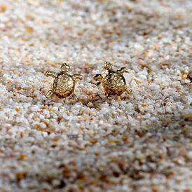 Unisexohrstecker Gold 375 Schildkröte - Ohrstecker Unisex   Oro Vivo